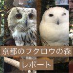 【2歳と行く】肉迫!なでられるフクロウのいる、京都のフクロウの森レポート。